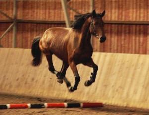Hevonen 2
